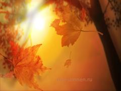 """Развитие словообразовательных навыков по материалам лексической темы """"Золотая осень"""""""