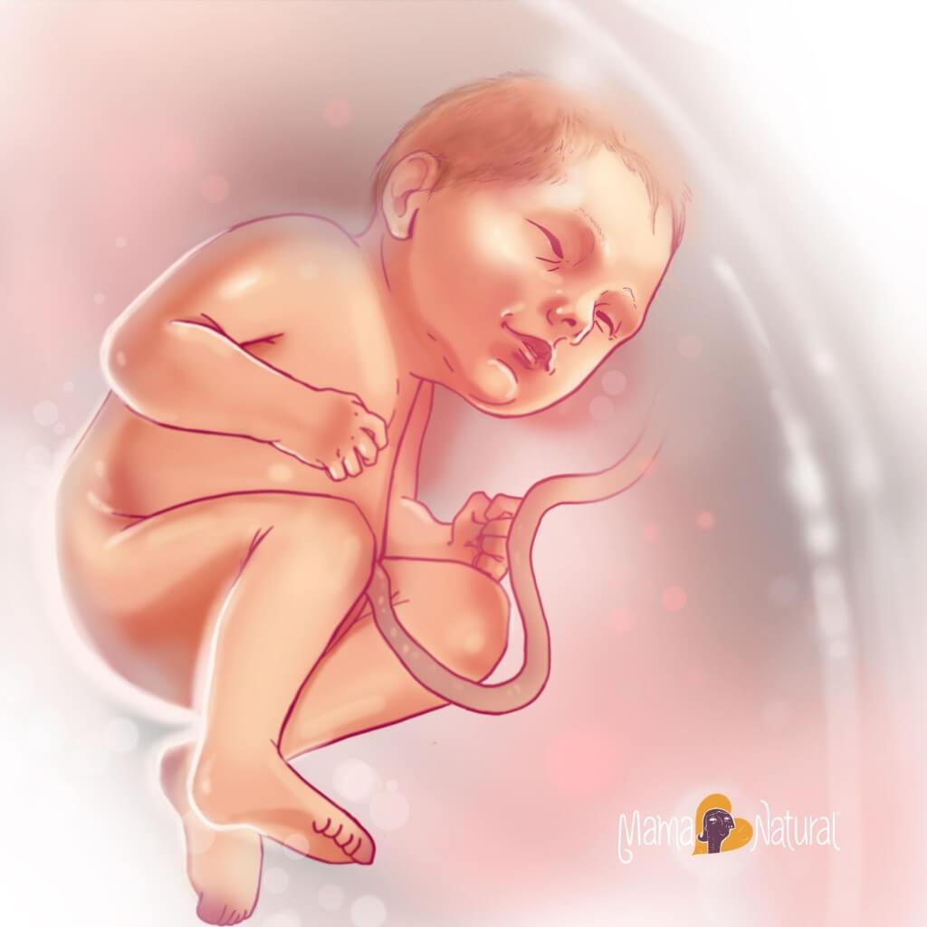 38 неделя беременности фото ребенка