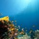 Что прячется на дне океана?