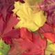 "Фронтальное занятие для детей с общим недоразвитием речи на тему ""Осенний мотив"""