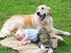 Как выбрать питомца, если есть маленький ребенок?