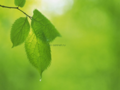 Сказка о стеклышке и зеленом листочке