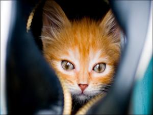 Сказка про Кота