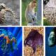 Какие есть интересные и необычные животные на нашей планете?
