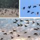 Почему птицы собираются в стаи