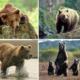 Медведи (Ursus)