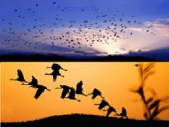 Миграция птиц: в предвкушении дальней дороги