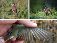 Линька птиц