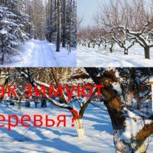 Как зимуют деревья?