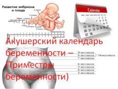 Акушерский календарь беременности – (Триместры беременности)