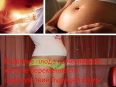 Развитие плода на четвёртом месяце беременности самочувствие будущей мамы