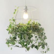 Для чего растениям нужен свет?