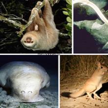 В мире удивительных животных, какие же они?