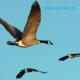 """Конспект логопедического занятия по лексической теме """"Перелетные птицы"""""""