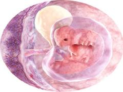 Шестая неделя беременности (6 неделя)