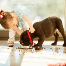 Домашние животные и дети: возможно ли это?