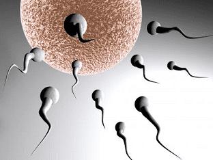 Зачатие ребенка как все рассчитать и забеременеть