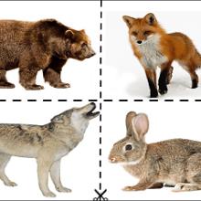 Конспект комплексного развивающего занятия для детей 2-3 лет «Дикие звери: лиса, медведь, заяц»