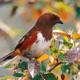 Конспект открытого подгруппового занятия НОД «Птицы»