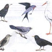 КВН по лексической теме «Перелетные птицы»