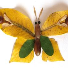 Как сделать бабочку своими руками?