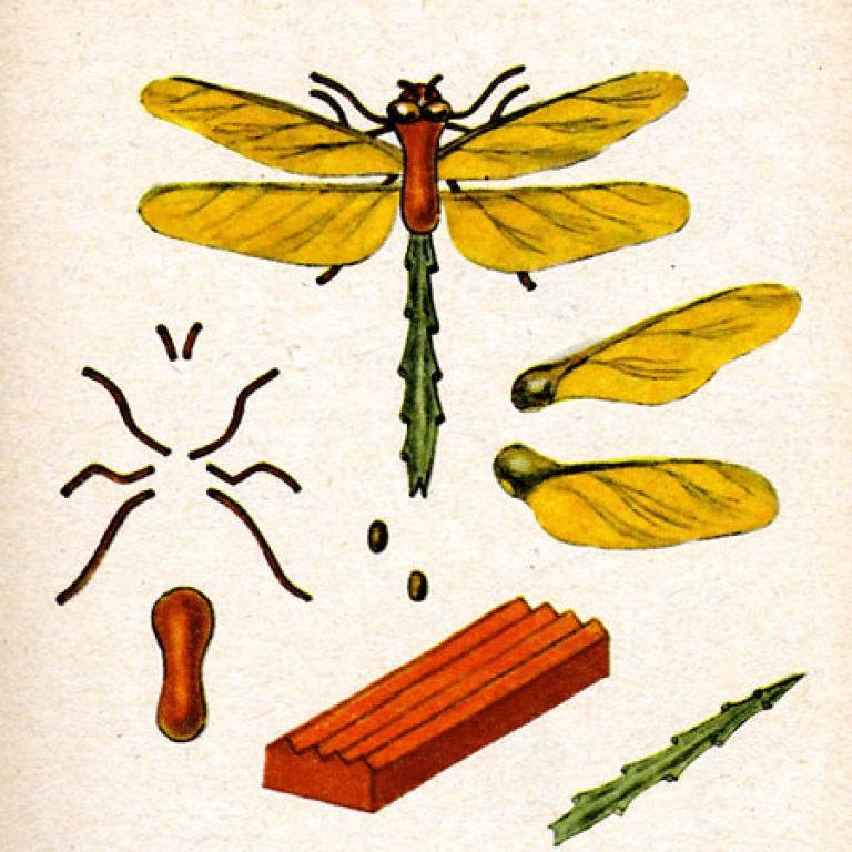Аппликация стрекоза из природного материала своими руками