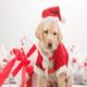 Статусы поздравления с Новым 2018 годом собаки