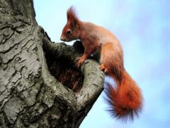 Чем питаются белки в наших лесах?