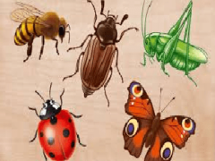 Познавательно-речевое занятие Насекомые. Составление описательного рассказа о насекомом