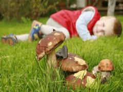 Отравление грибами: признаки и первая помощь