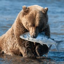 Что ест медведь в дикой природе и где живет?