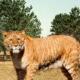 Тигролев и лигр-кто это? В чем их отличие?