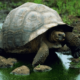 Какой вес у черепах: маленьких и больших?