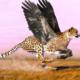 Какое животное самое быстрое в мире?